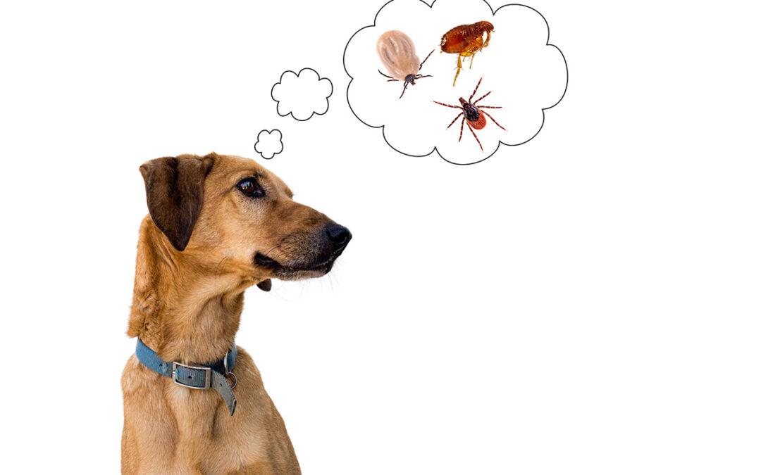 Ihr Tier hat Flöhe?